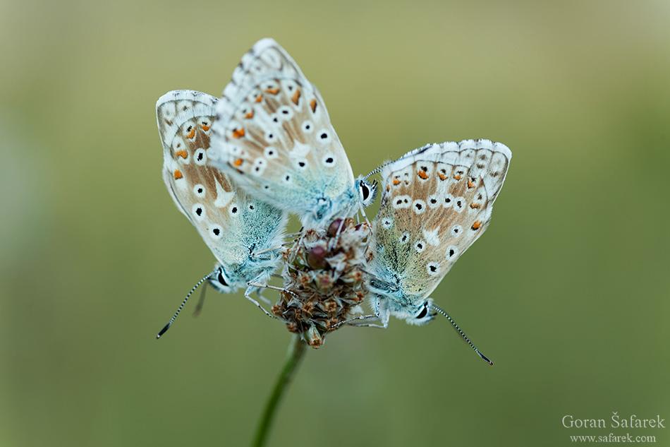 croatia, velebit, lika, mountain, national park, nature park, butterfly