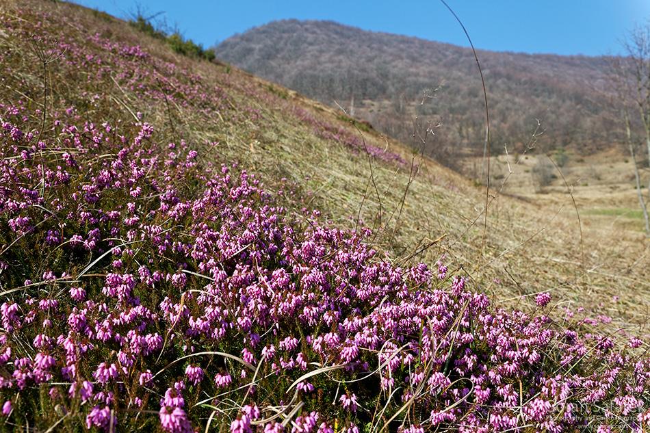 croatia, mountains, hiking, alpinism, summit, samobor, samoborsko gorje