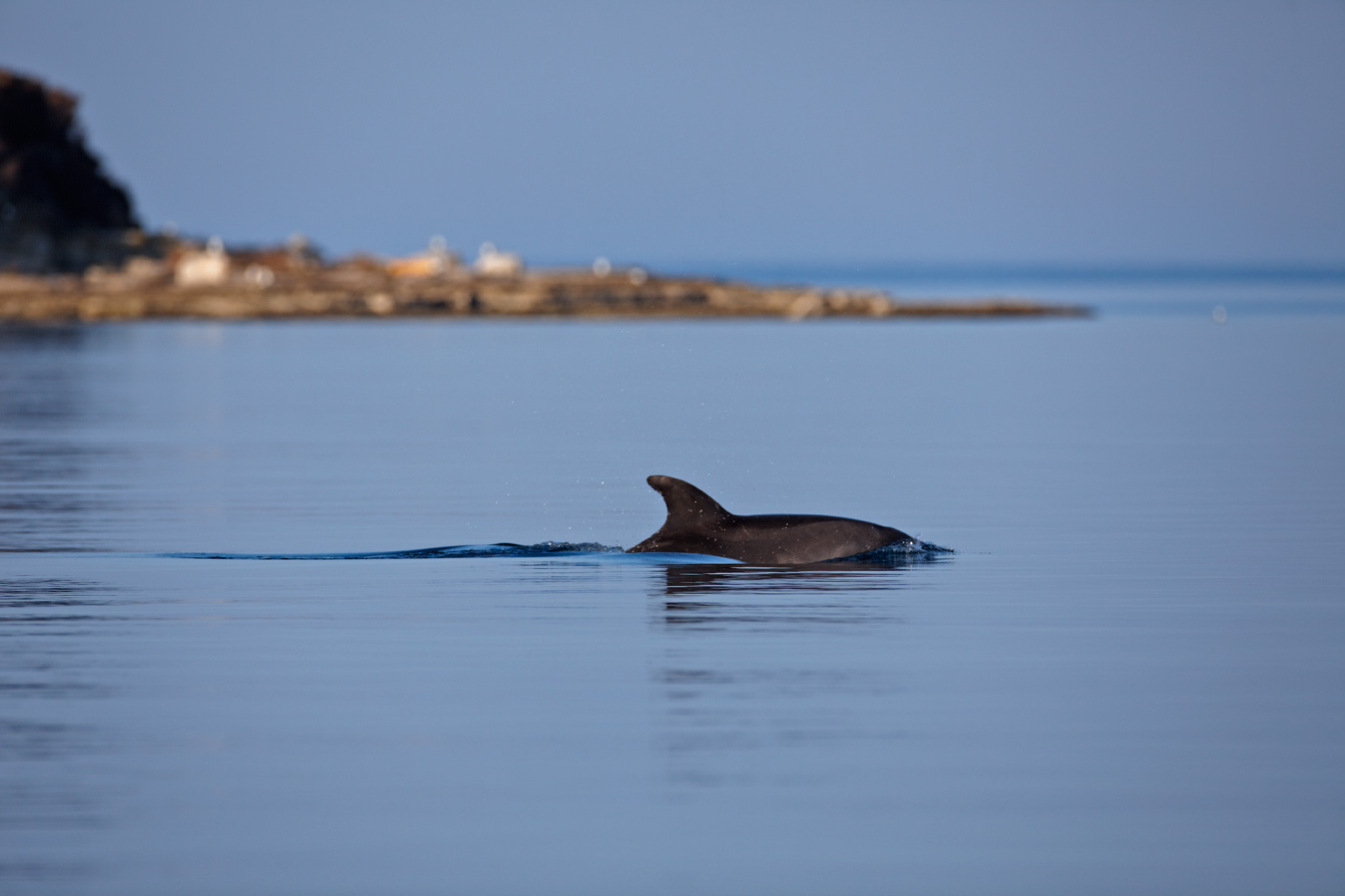 croatia, sea, brijuni, istra, croatia, national park, coast, adriatic, dolphin