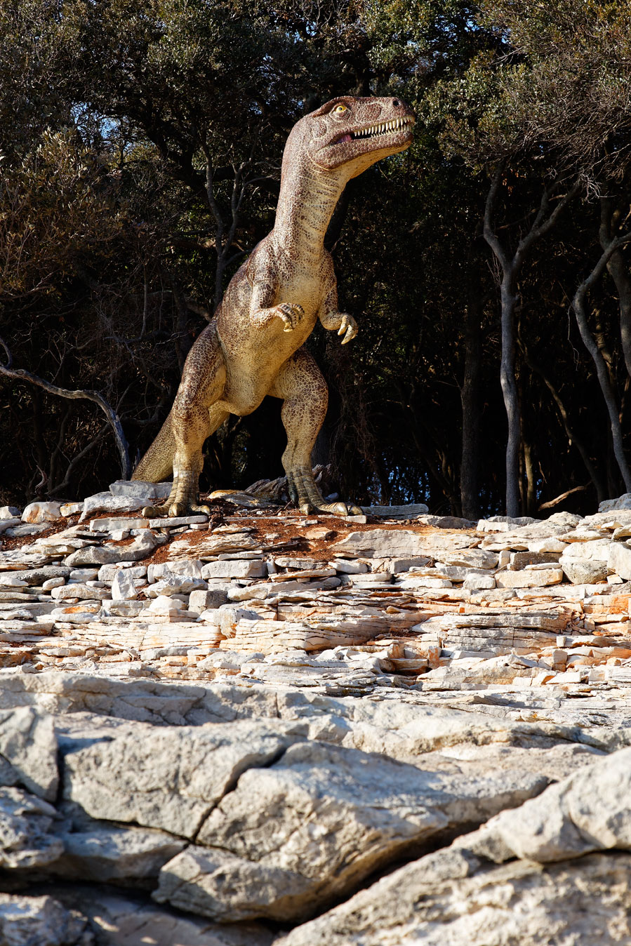 croatia, sea, brijuni, istra, croatia, national park, coast, adriatic, dinosaurs