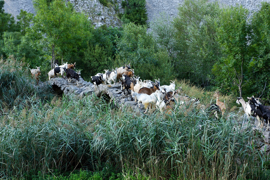 krupa, river, canyon, dalmatia, water, oasis,waterfall, kude bridge, kudin most, goat