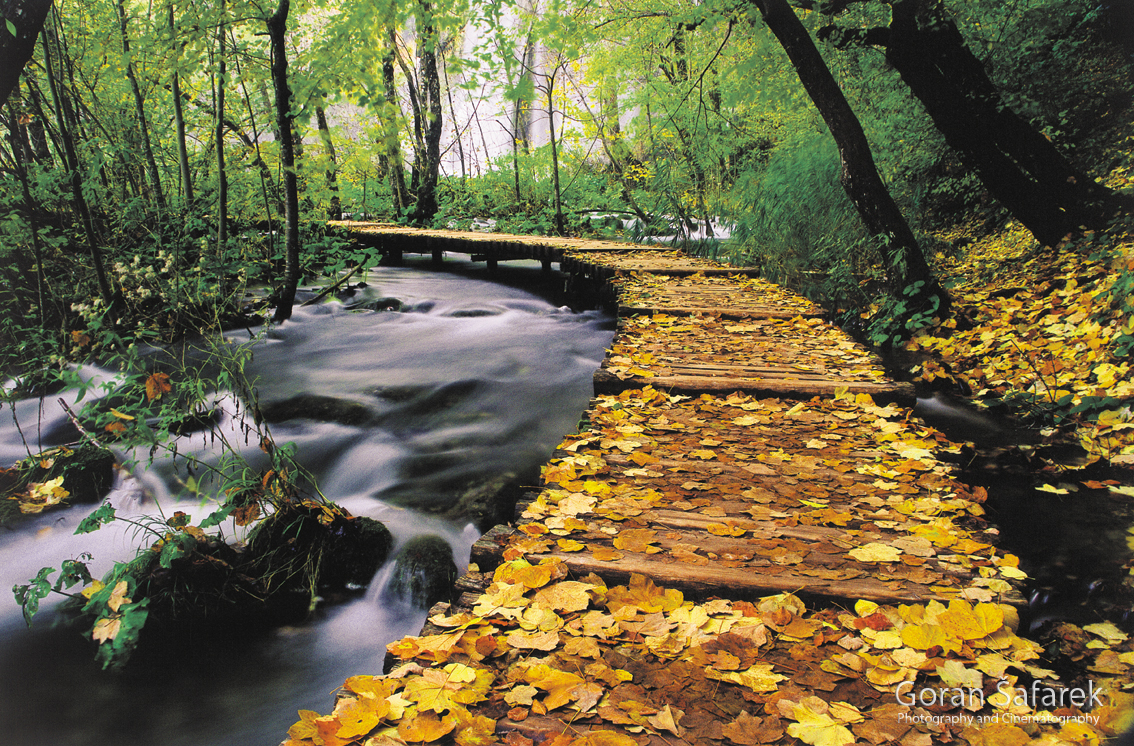 croatia, nature, nature park, national park, plitvice lakes, plitvička jezera, autumn