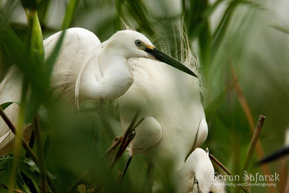 birdwatching, birding, croatia, birds, ringing, ornithology, krapje đol, lojsko polje