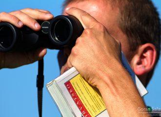 birdwatching, birding, croatia, birds