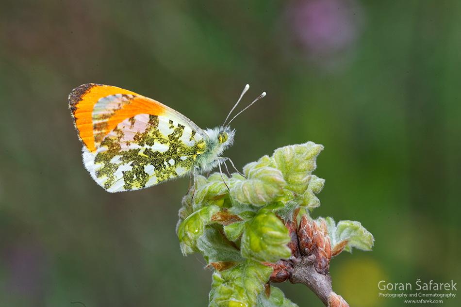 Kotli, istra, istria, croatia, village, river,butterfly