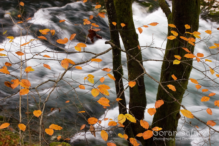 forest, mountain, kamačnik, canoyn,river,gorski kotar,vrbovsko, croatia, rapids,waterfalls, fall, autumn