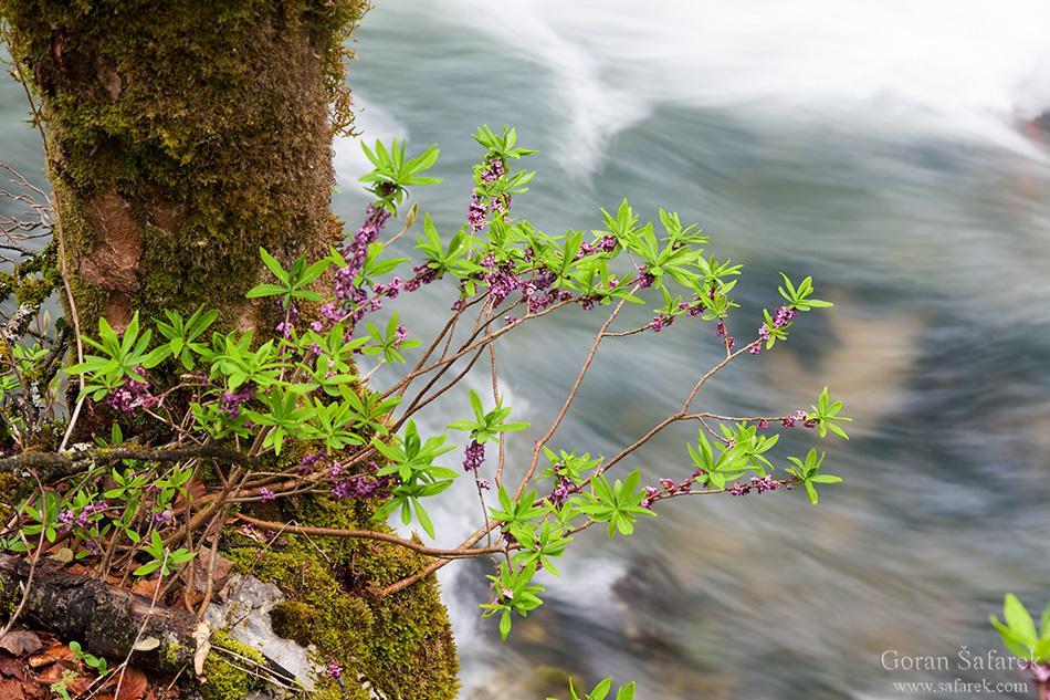forest, mountain, kamačnik, canoyn,river,gorski kotar,vrbovsko, croatia, rapids,waterfalls,
