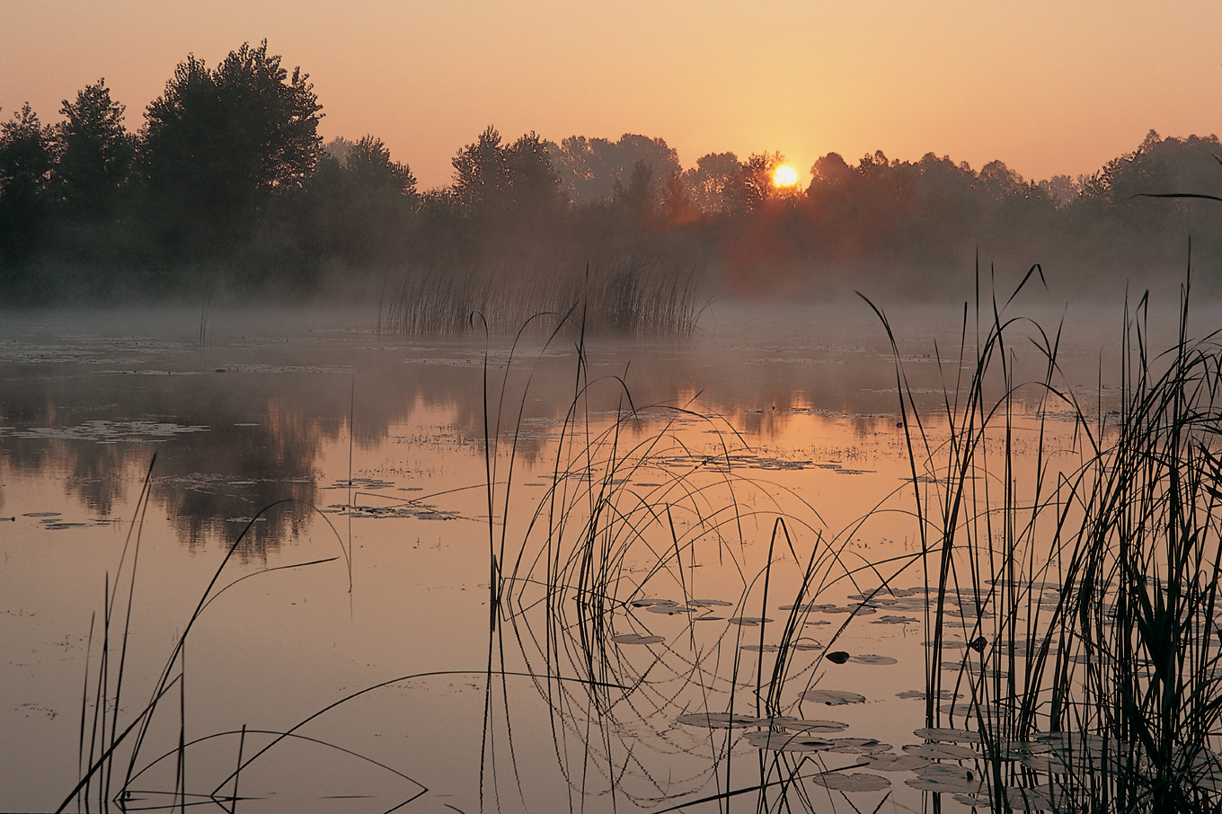 šoderica, croatia,lake, podravina, continental, plain, water, resort nature, wetland, river, sunrise