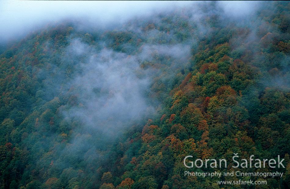 Zeleni vir, Devil's Passage, gorski kotar, torrent, river, forest, canyon