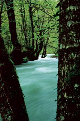 Zeleni vir, Devil's Passage, gorski kotar, torrent, river, forest, canyon, rapids