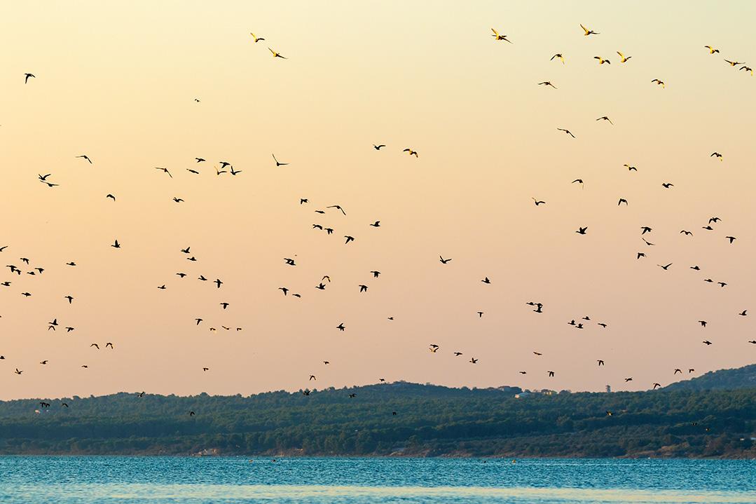 croatia, vrana lake, dalmatia,nature park, birds, sunset