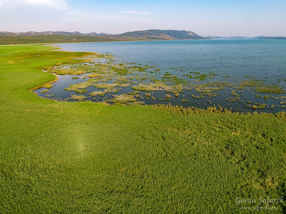 croatia, vrana lake, dalmatia,nature park, reeds