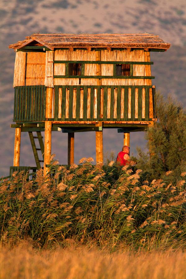 croatia, vrana lake, dalmatia,nature park, birdwatching